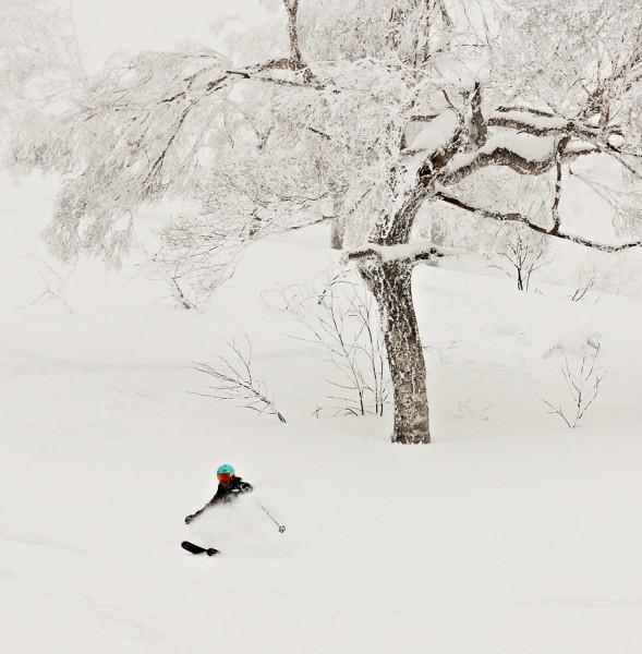 Ski Japan Powder