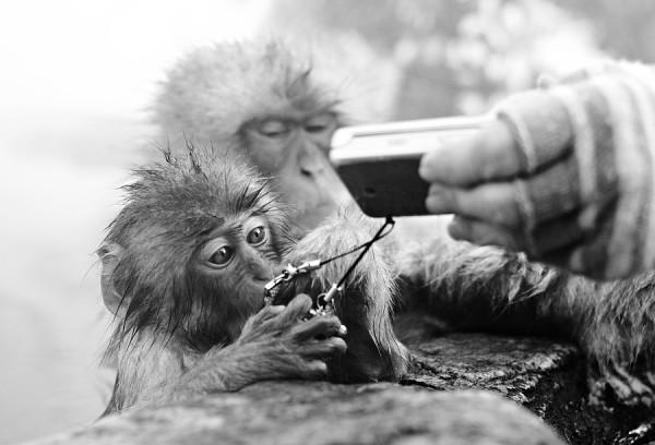 Monkey inspects phone