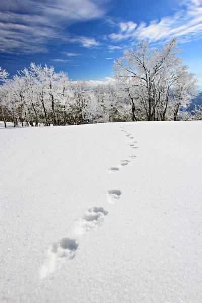 Footprints in the snow at Yamabiko.