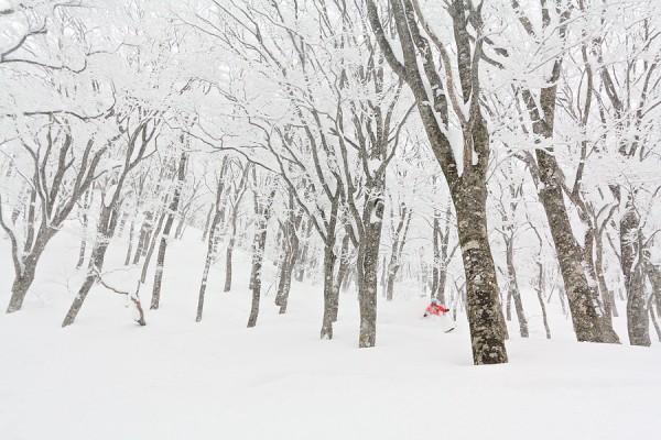 Musse skis a deep powder run at Nozawa Onsen.