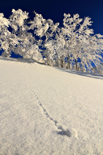 Nozawa Snow Report 09 March 2015 - Powder is coming!!