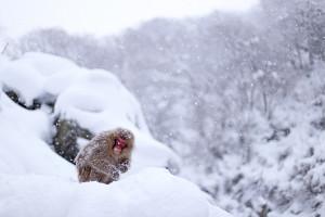 Nozawa Snow Report 28 December 2013
