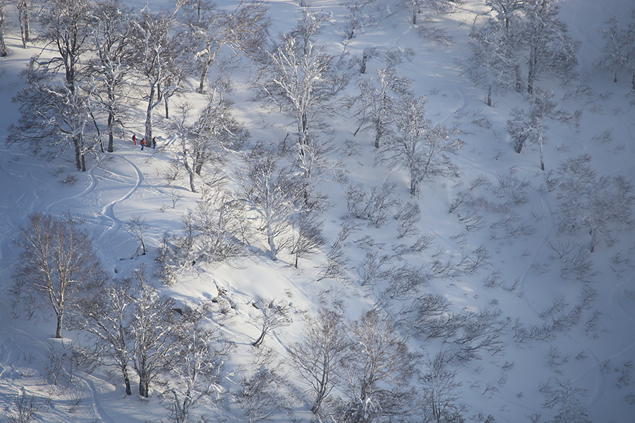 Nozawa Snow Report 2 January 2014: Overnight Dumpage