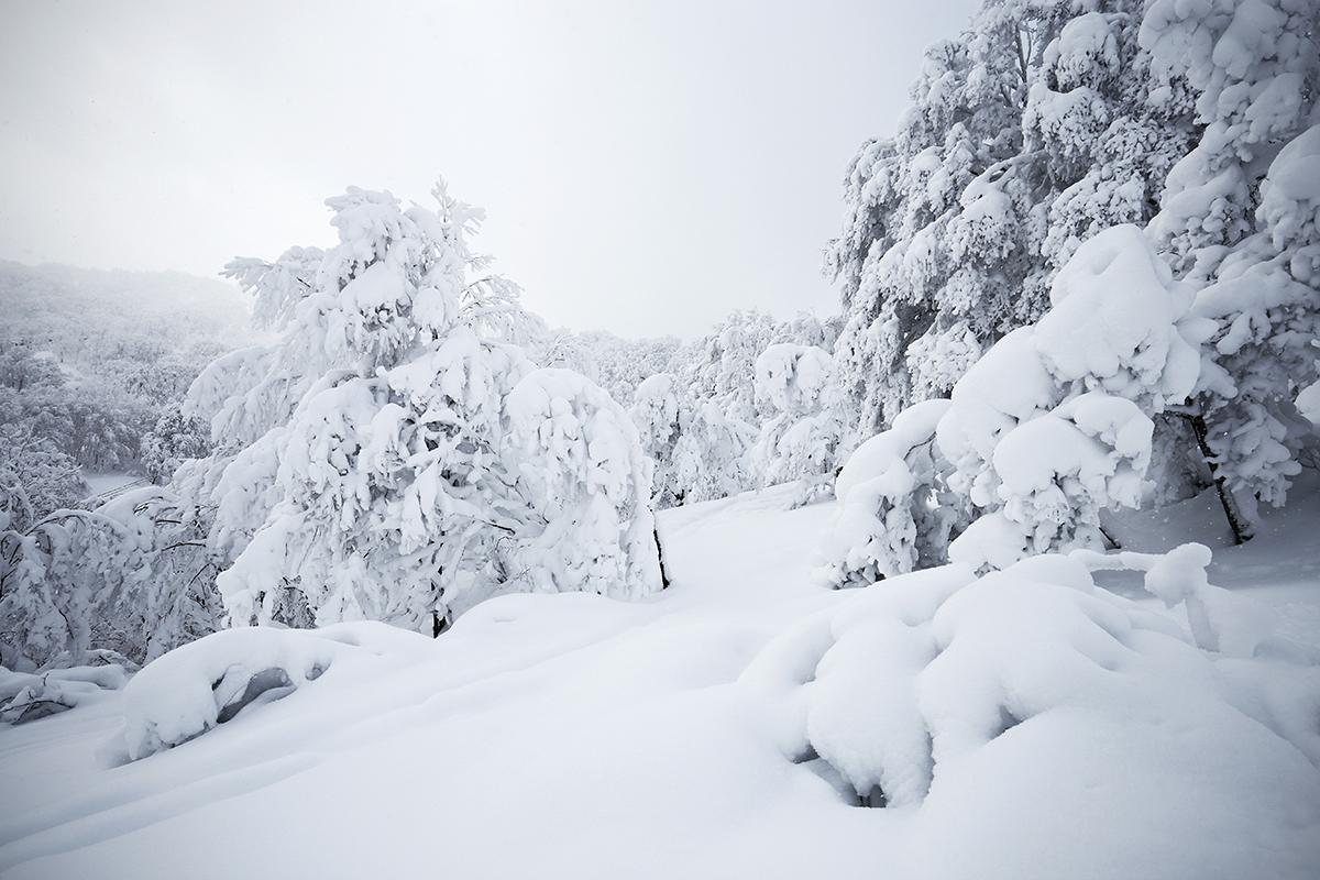 Nozawa Onsen Snow Report 10 February 2014