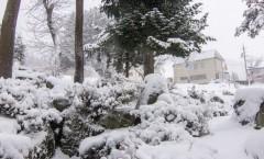 Nozawa Snow Report 29 January 2016: Nozawa is getting dumped on today!