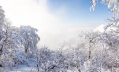Nozawa Onsen Snow Report 13 March 2016