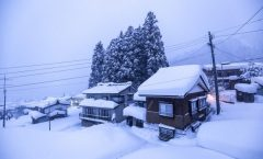 Nozawa Snow Report 22 January 2017