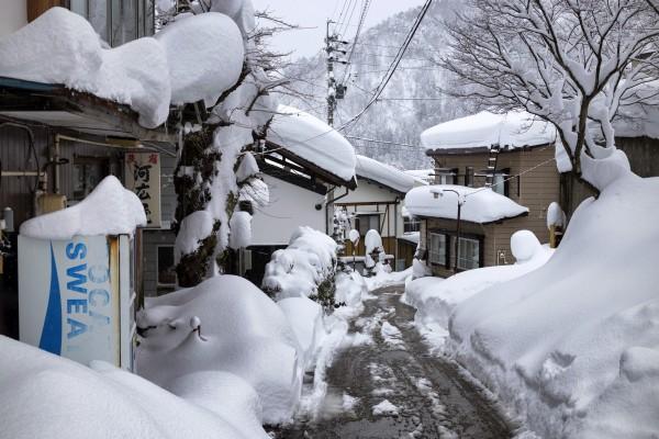 Nozawa Snow Report 21 January 2017