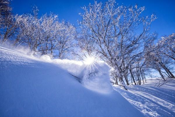 Nozawa Snow Report 29 January 2017