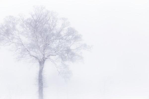 Nozawa Snow Report 4 January 2017