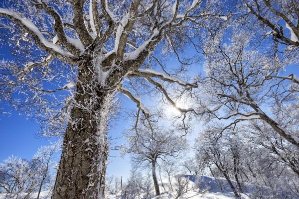 Nozawa Snow Report 8 January 2017
