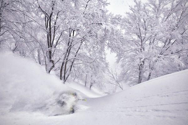 Nozawa Snow Report 8 February 2017
