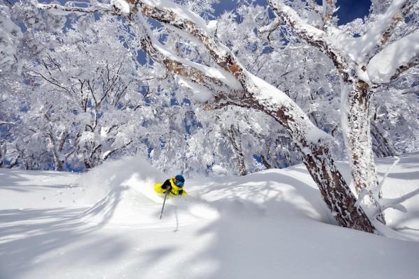 Nozawa Snow Report 11 February 2017