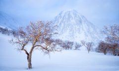 Nozawa Snow Report 11 March 2017