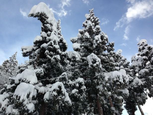A Very Merry White Christmas From Nozawa