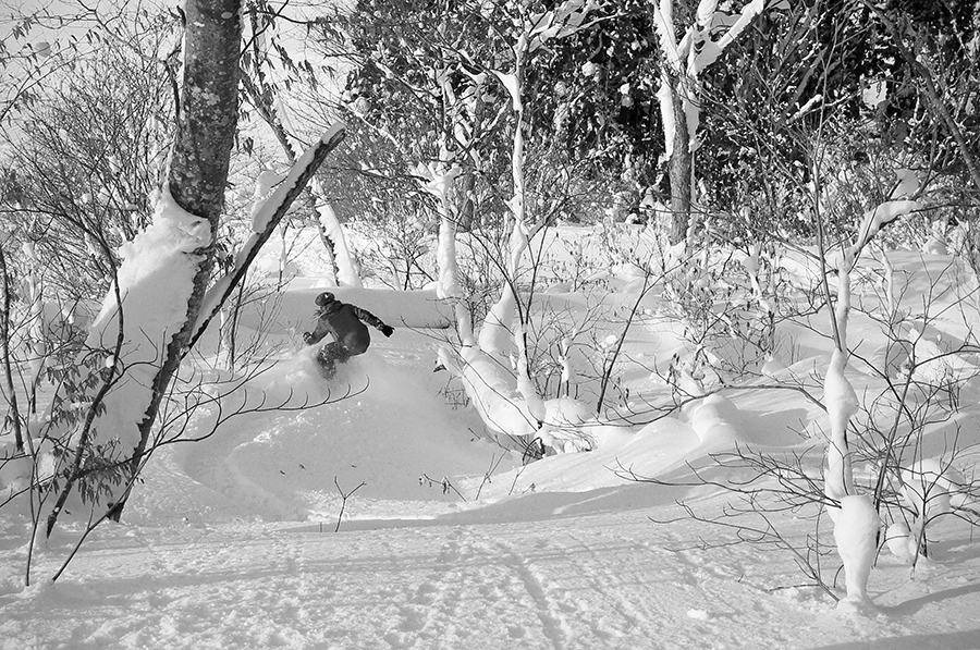 A snowboarder rides with confidence through the lower trees of Nozawa Onsen.