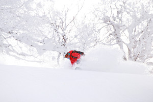 Nozawa Onsen Snow Report 23 January 2014