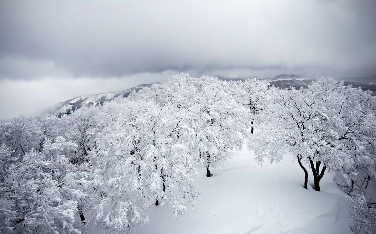 Nozawa Onsen Snow Report 6 February 2014