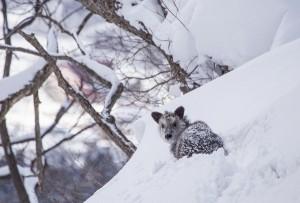 Nozawa Snow Report 16 February 2015 - A Happy Monday
