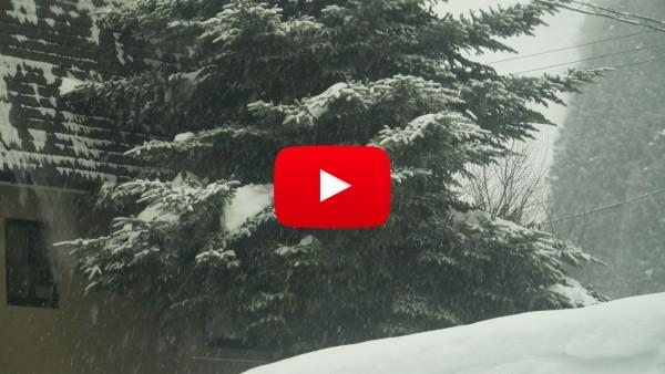 Nozawa Snow Report Monday 12th of February 2018